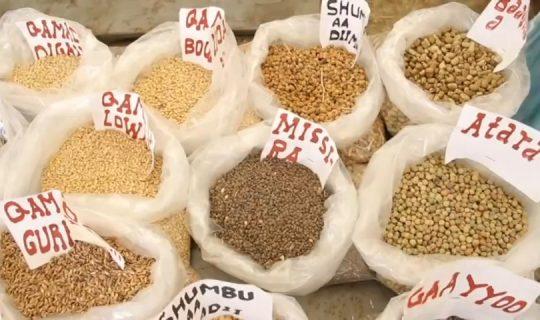 Celebrating Seeds MELCA-Ethiopia with Telecho Community_Moment124