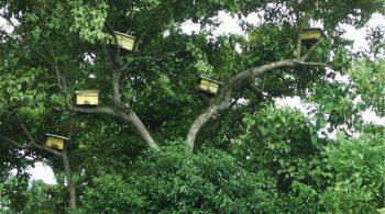 Beekipeeing